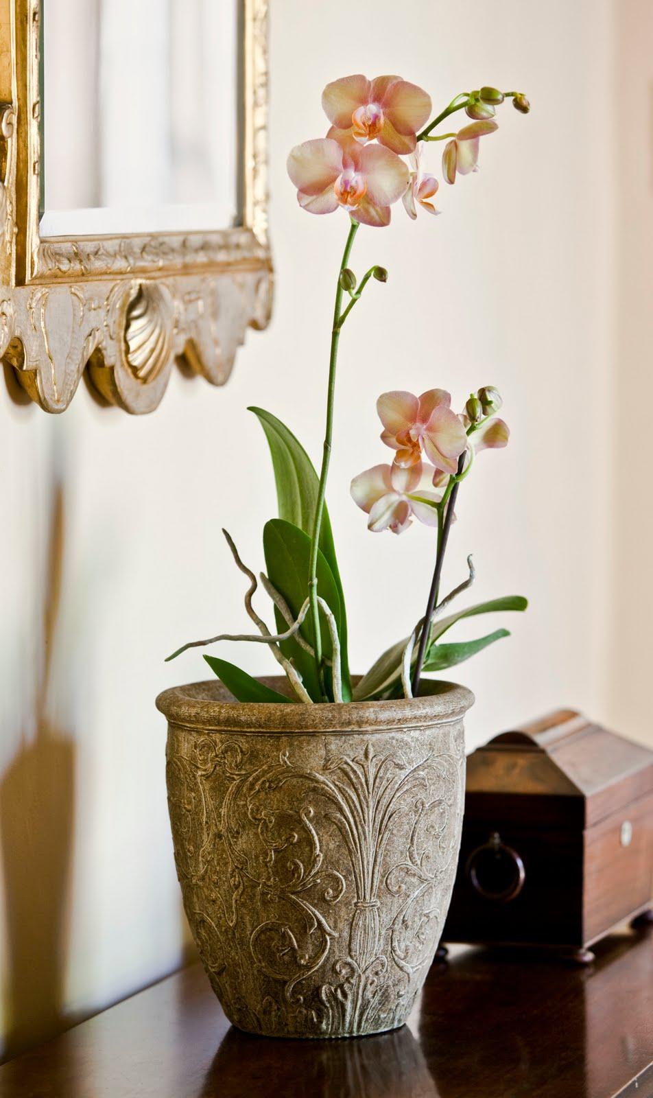 Уход за домашней орхидеей