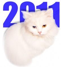 Год белого Кота