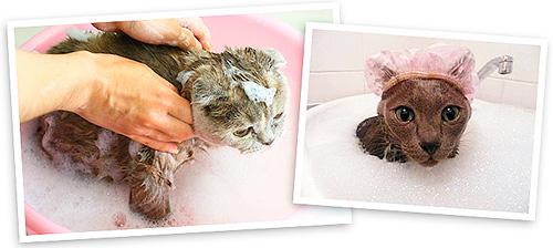 process-kupaniya-domashnego-zhivotnogo-protivobloshinym-shampunem
